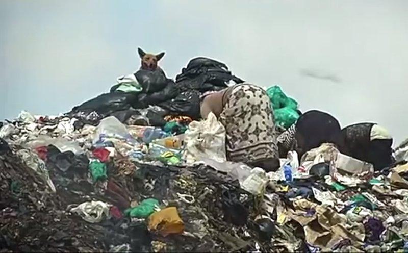 загрязнение природы человеком