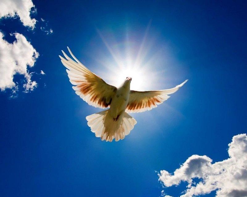 заповеди блаженства новый завет