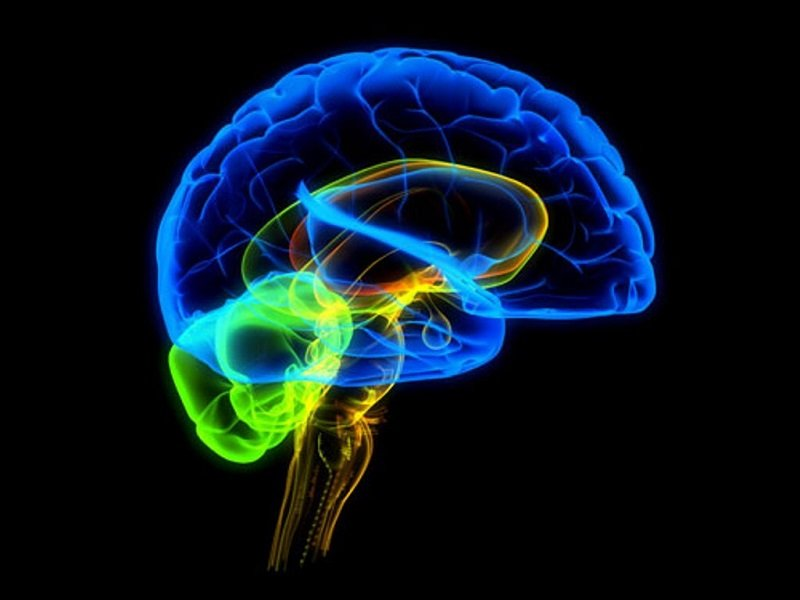 как сохранить здоровье головного мозга