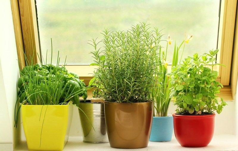 выращивание зелени дома на продажу