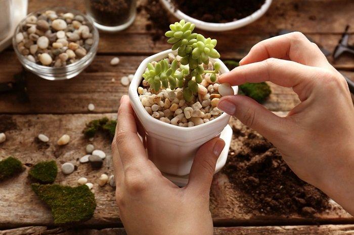 мульчирование хвойных растений