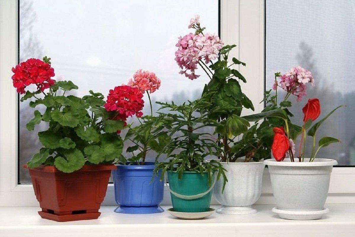 железо для растения