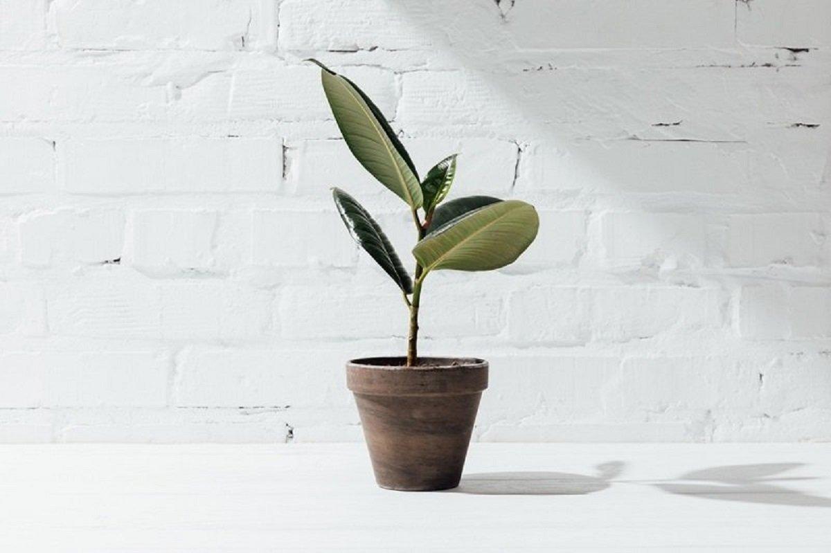 железо для растений своими руками
