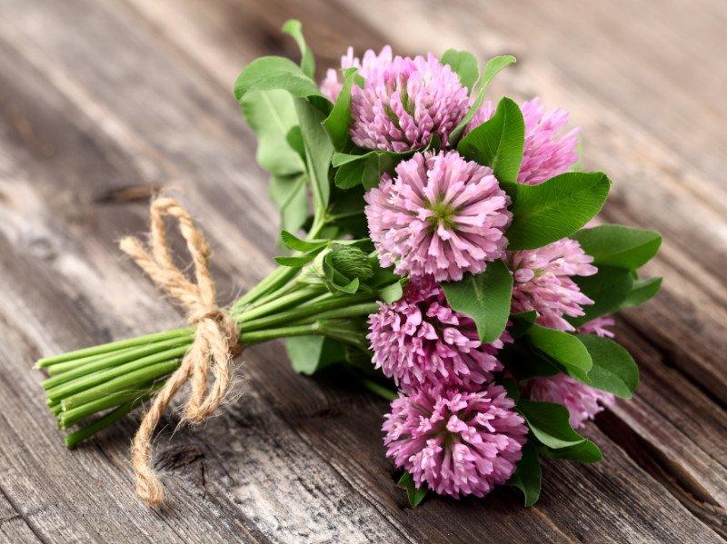 Травы при климаксе сборы и растительные лекарства от приливов и потливости