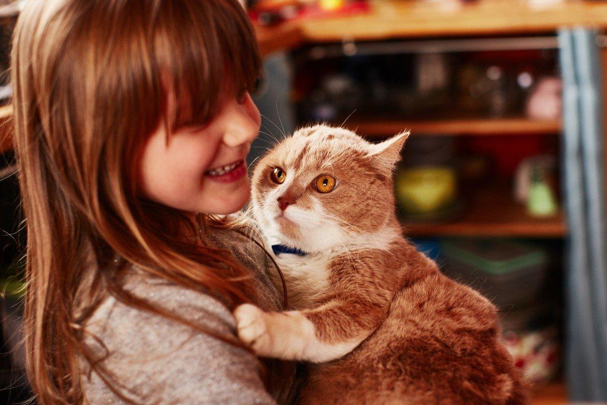 Что нельзя делать с кошкой, чтобы не нарушить идиллию Вдохновение,Советы,Животные,Коты,Кошки,Питомцы