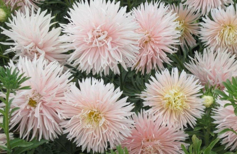 Список буйнорастущих цветов для успешной посадки под зиму
