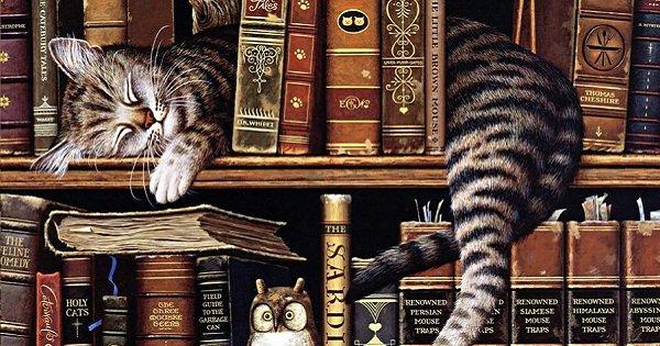 кот на книжной полке